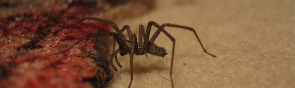 combatir arañas