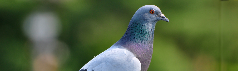 eliminar-aves
