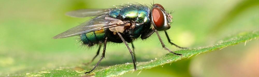 eliminar moscas