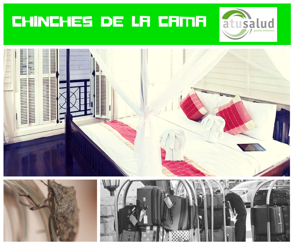 Chinches de la cama