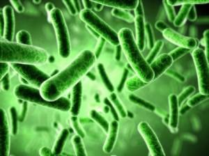 Bacteria de la Legionella
