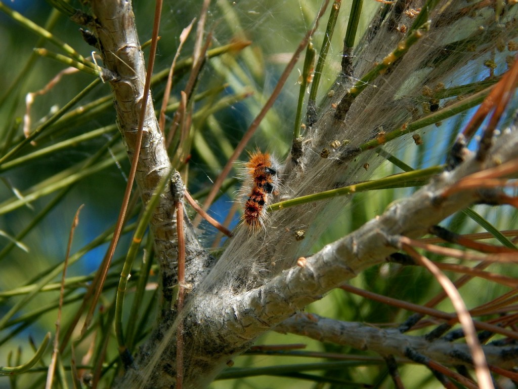 caterpillars-605572_1280