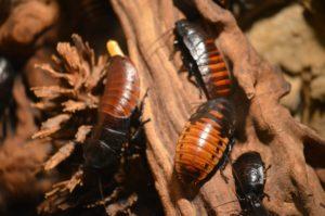 Control de plagas cucarachas en Albacete