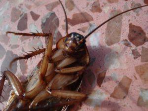 Empresa de desinfección de cucarachas