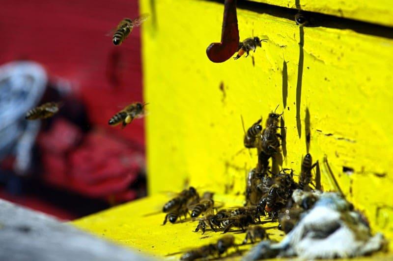 El calor aumenta las plagas de insectos