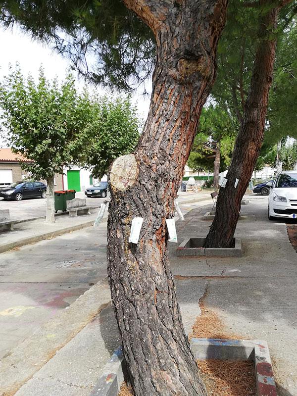 Tratamiento ynject en árboles